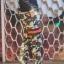 กางเกง Jogger ขาจั๊ม พรีเมี่ยม ผ้า วอร์ม รหัส WT 679 BR สีทหาร แถบ ดำ แดง thumbnail 4
