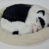ตุ๊กตาแมว นอนหลับ หายใจได้ (ใส่ถ่าน) สีขาวดำ