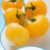 Orange tomato seeds