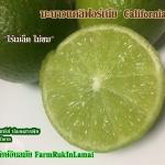 มะนาวแคลิฟอร์เนีย ไร้เมล็ด (California lime)