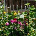 8 แนวคิดการนำต้นไม้มาทำรั้วบ้าน