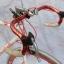 จักรยาน เสื้อหมอบ SUNRISE thumbnail 8