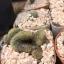 กระบองเพชร cactus กระถางละ 25 บาท thumbnail 5