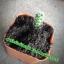 กระบองเพชร cactus thumbnail 4
