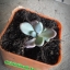 กระบองเพชร cactus thumbnail 16