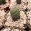 กระบองเพชร cactus กระถางละ 25 บาท thumbnail 4