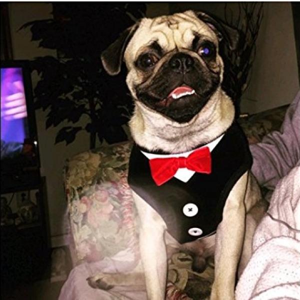 รูปภาพสินค้า สายรัดอกสุนัข สายจูงน้องหมา ชุดสูท โบว์แดง