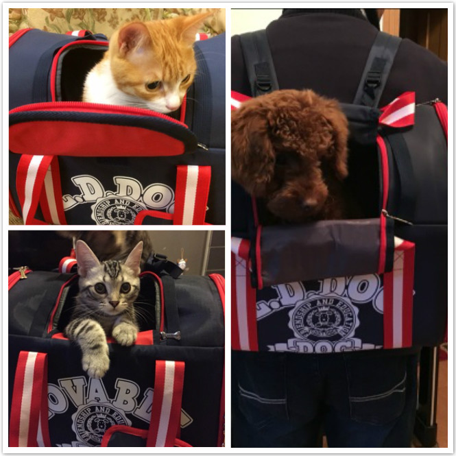 ขาย กระเป๋าเป๋ สำหรับหมาแมว ราคาถูก